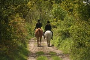 Un enterrement de vie de célibataire tout en nature: la balade à cheval